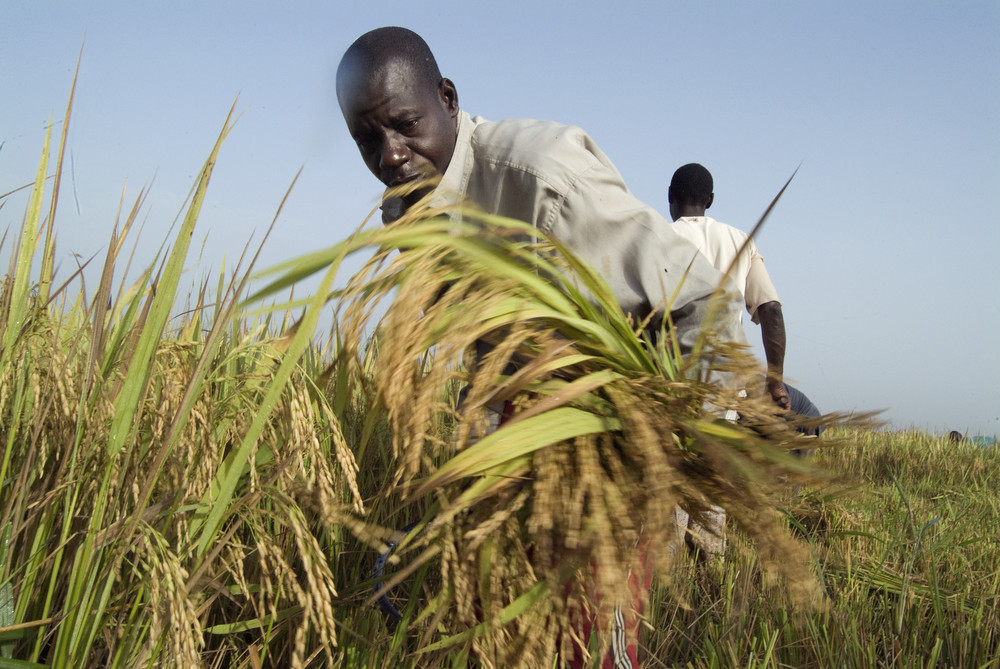 Bridging the gap in risk management: FAO,EU,NEPAD, IFAD and PARM joint e-learning event